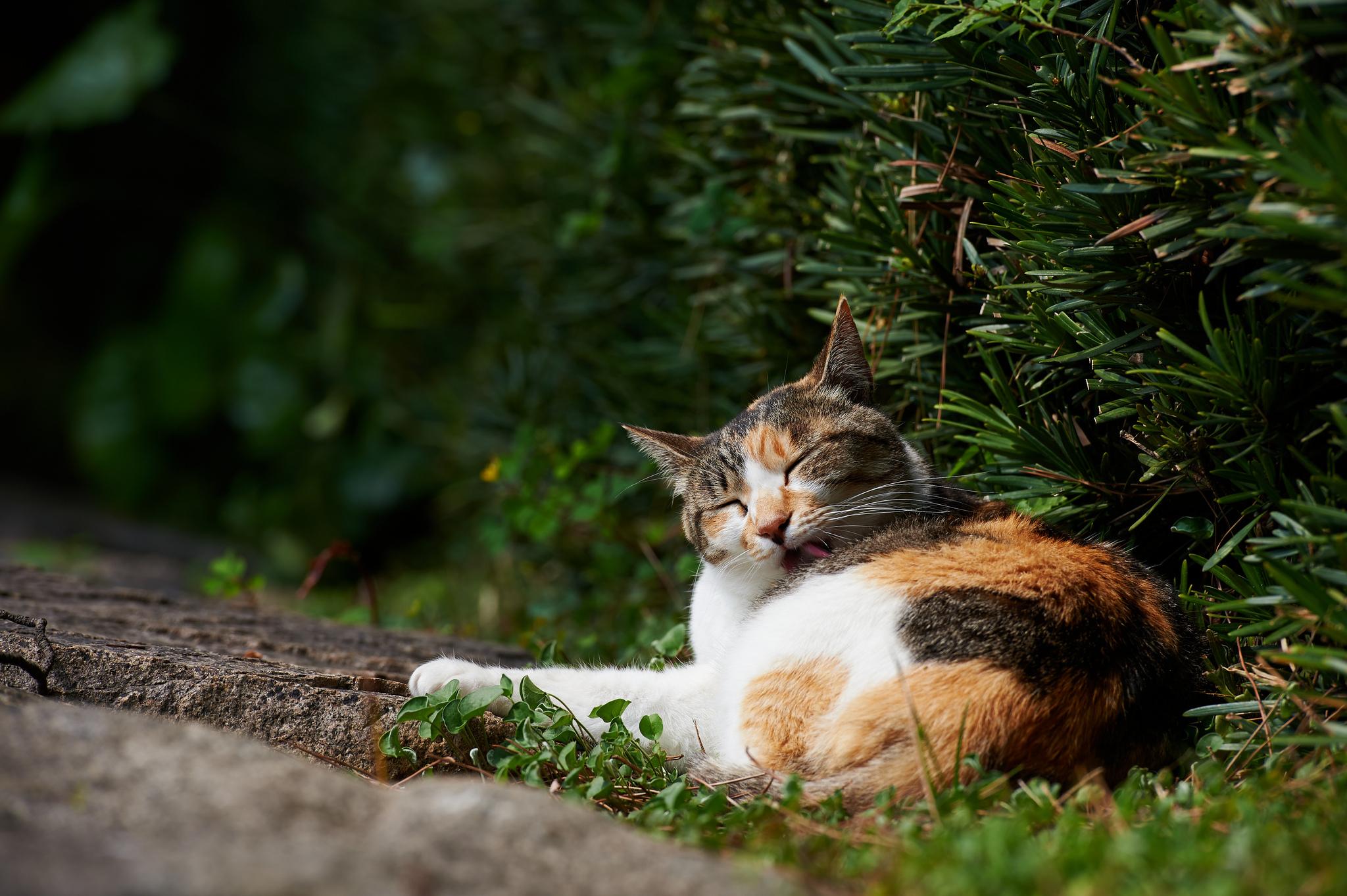 壁纸 动物 猫 猫咪 小猫 桌面 2048_1363
