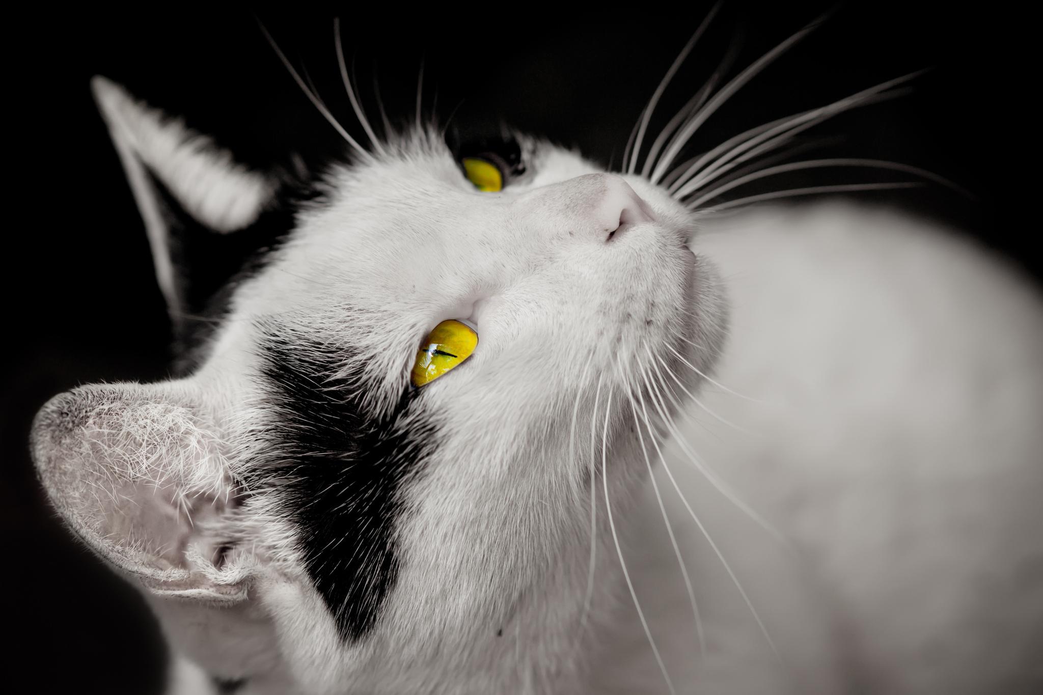 壁纸 动物 猫 猫咪 鸟 鸟类 雀 小猫 桌面 2048_1365