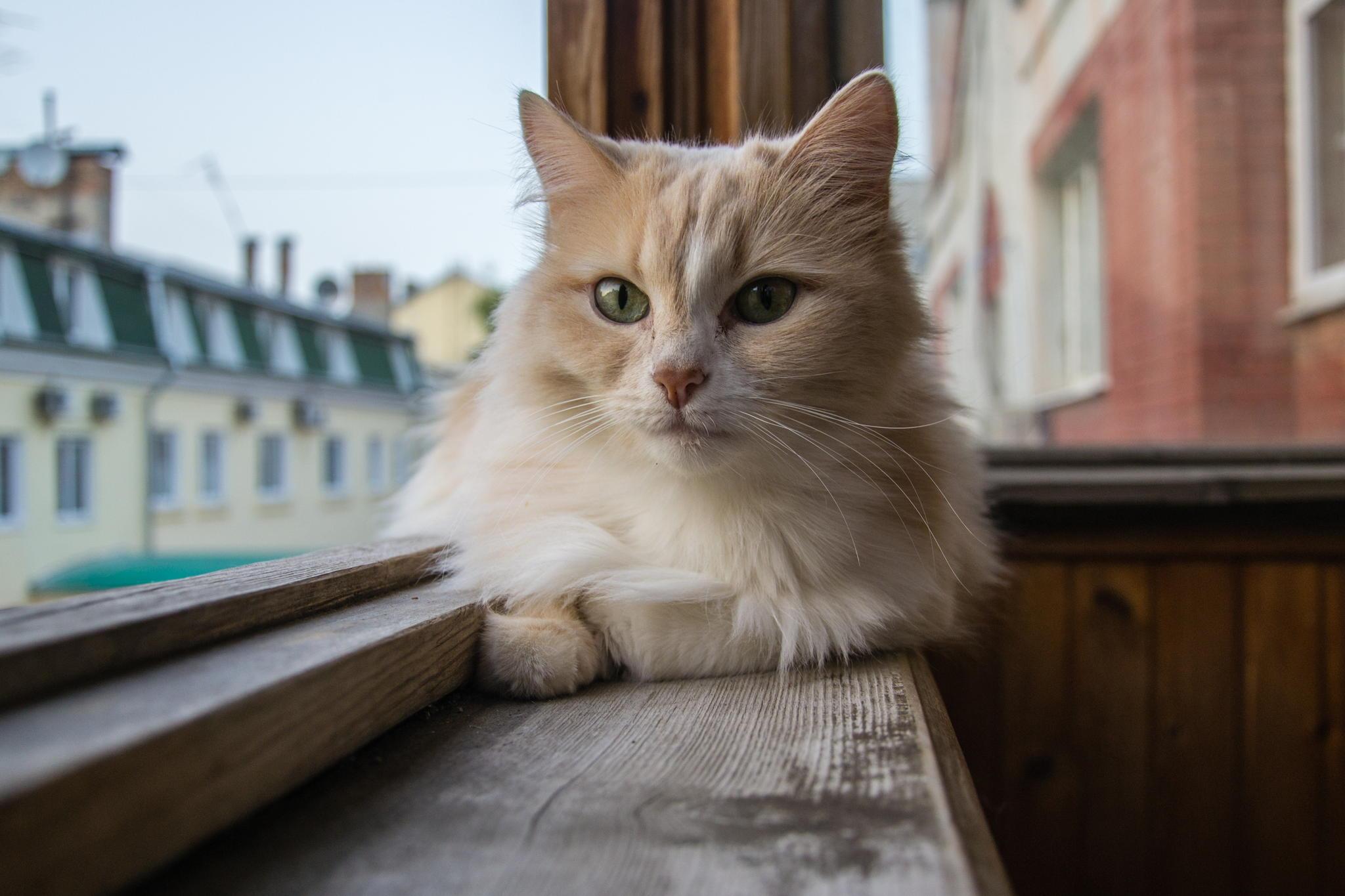 壁纸 动物 猫 猫咪 小猫 桌面 2048_1365